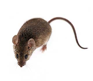 Rodent Proofing Services | Burbank, CA